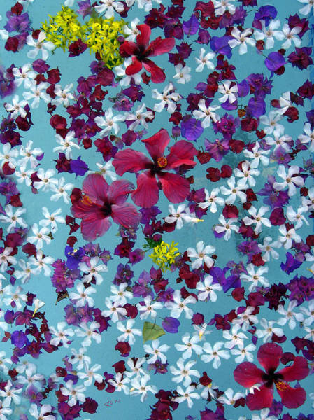 Photograph - Flower Fantasy Guatemala by Kurt Van Wagner
