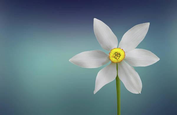 Wall Art - Photograph - Flower Paradise by Bess Hamiti