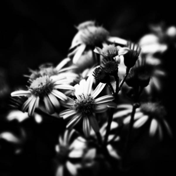 Blossom Photograph - #flowers #flower #tagsforlikes #petal by Jason Michael Roust