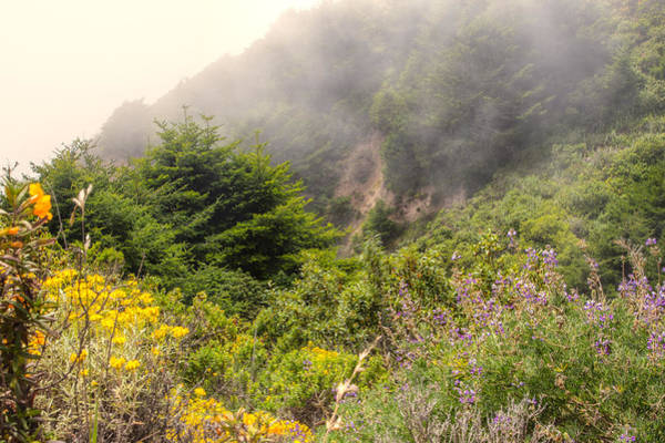 Photograph - Flowers In The Mist by Peter Dyke