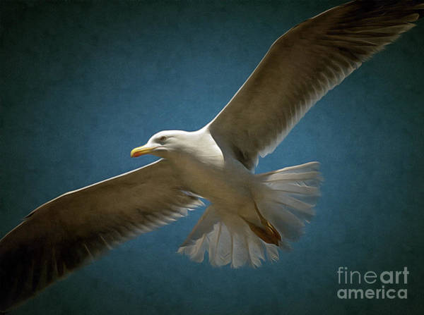 Painting - Flying Seagull by Odon Czintos