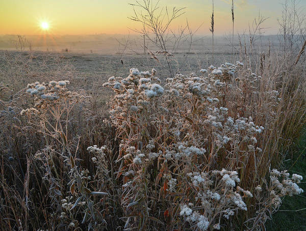 Photograph - Fog On The Prairie In Glacial Park by Ray Mathis