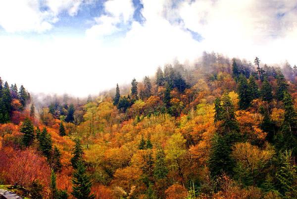 Photograph - Foggy Fall by Marty Koch