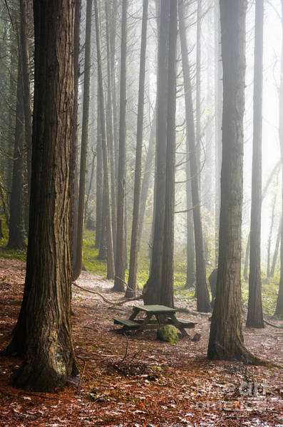 Picnic Tables Photograph - Foggy Forest by Carlos Caetano
