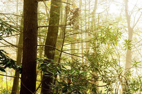 Photograph - Foggy Forest by Thomas R Fletcher