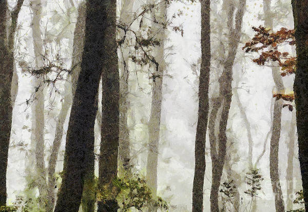 Painting - Foggy Forest Tree Paint by Odon Czintos