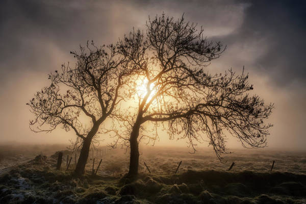 Photograph - Foggy Morning by Jeremy Lavender Photography