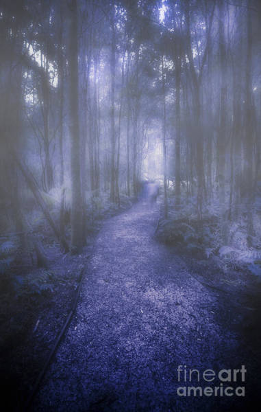 Wall Art - Photograph - Forest Of Darkness by Jorgo Photography - Wall Art Gallery