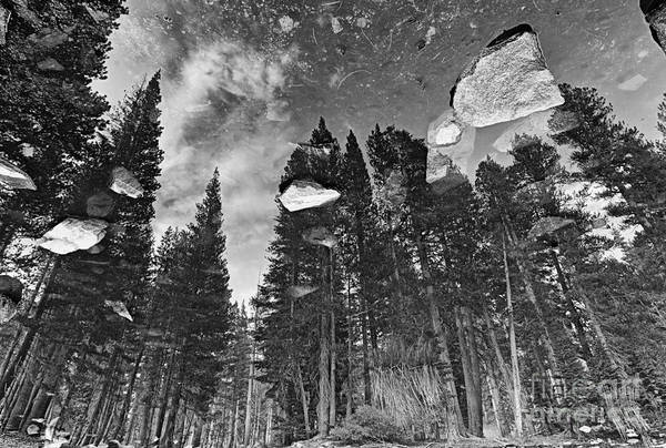 Wall Art - Photograph - Forest Reflection by Jamie Pham