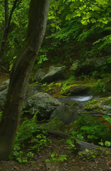 Wall Art - Photograph - Forest Stream by Stephen  Vecchiotti
