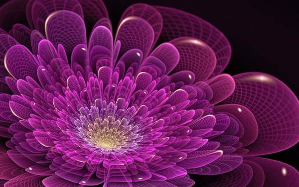 Flower Digital Art - Fractal by Maye Loeser