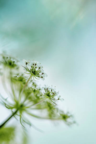 Wall Art - Photograph - Fragile by Nailia Schwarz