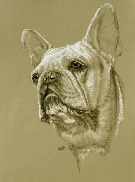Drawing - French Bulldog by Barbara Keith