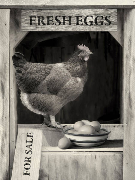 Photograph - Fresh Eggs by Robin-Lee Vieira