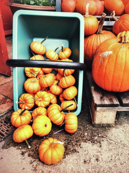 Diversity Wall Art - Photograph - Fresh Pumpkins Selection by Tom Gowanlock