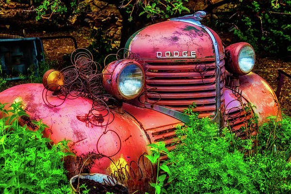 Wall Art - Photograph - Front End Of Old Dodge by Garry Gay