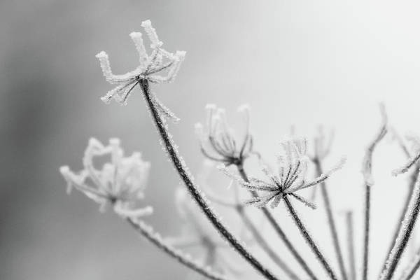 Photograph - Frost by Wendy Cooper