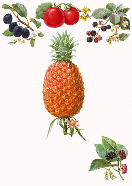 Wall Art - Painting - Fruits by English School