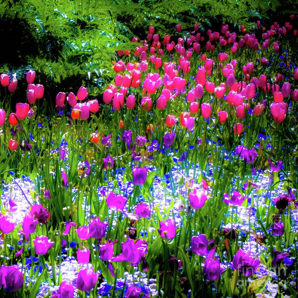 Photograph - Garden Flowers With Tulips by D Davila
