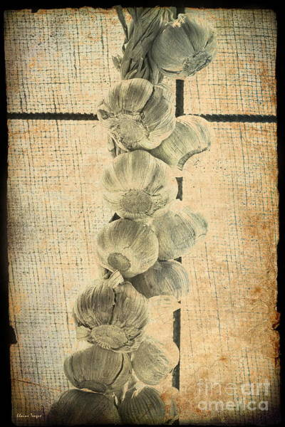 Photograph - Garlic by Elaine Teague