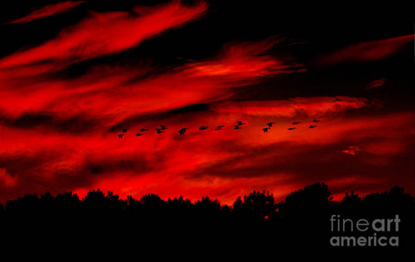 Photograph - Geese Setting  by Kim Pate