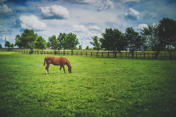 Thoroughbred Racing Wall Art - Photograph - Genuine Reward by Shane Holsclaw