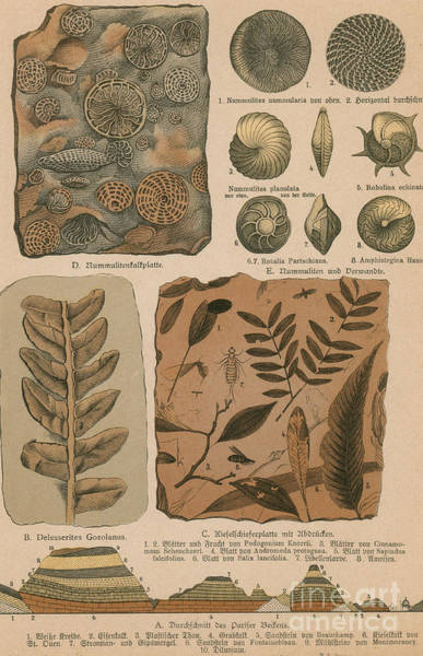 Photograph - Geology And Paleontology, 1886 by Science Source