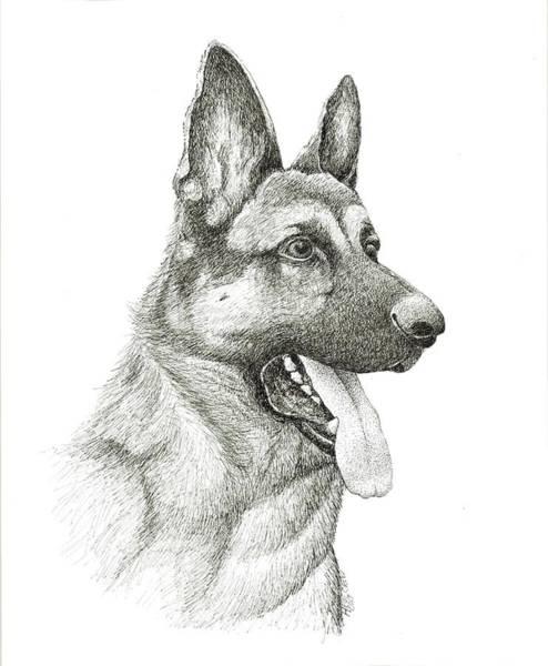 German Shepherd Drawing - German Shephard by Heidi Creed
