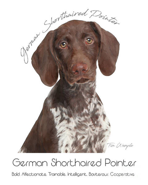 Digital Art - German Shorthaired Pointer Poster by Tim Wemple