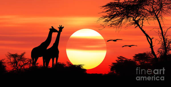 Photograph - Giraffes At Sunset by Warren Photographic