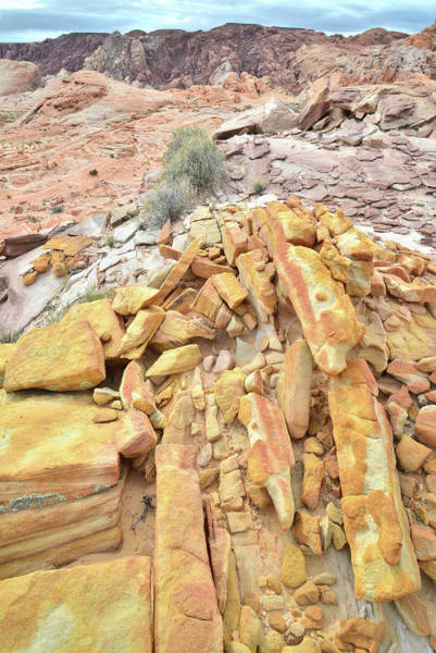Photograph - Gold Bars In Valley Of Fire by Ray Mathis