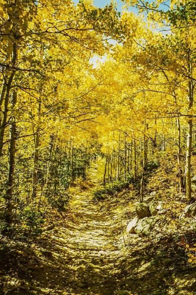 Photograph - Golden Aspens In Colorado Mountains by NaturesPix