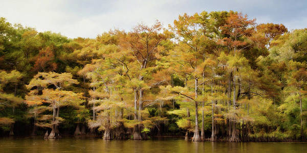Wall Art - Photograph - Golden Bayou by Lana Trussell