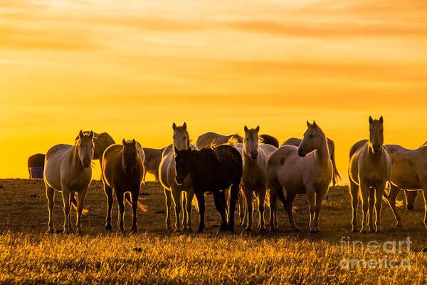 Photograph - Golden Sky by Jim McCain