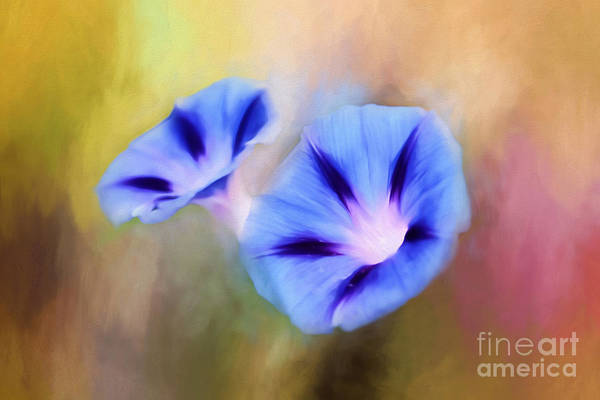 Convolvulaceae Wall Art - Photograph - Good Morning by Darren Fisher