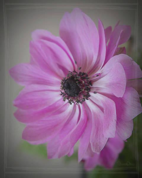 Photograph - Good Morning Sunshine 8492 by Teresa Wilson
