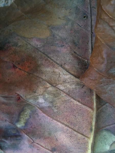 Dakar Photograph - Goree Leaf Texture by Fania Simon