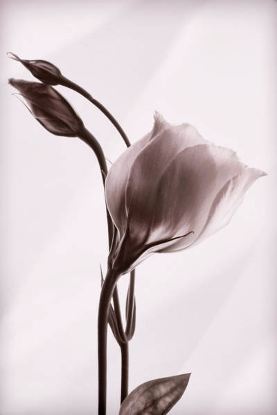 Photograph - Grace In Simplicity by Leda Robertson