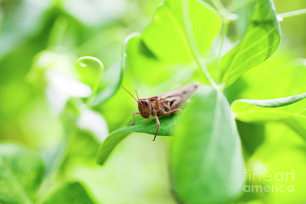 Wall Art - Photograph - Grasshopper by Kati Finell