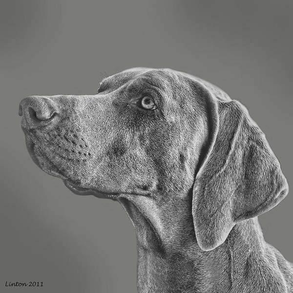 Digital Art - Gray Ghost by Larry Linton