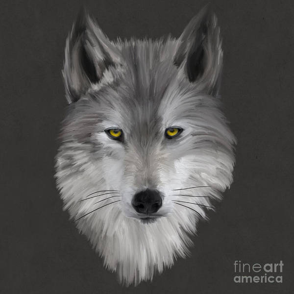 Furry Digital Art - Gray Wolf by John Edwards