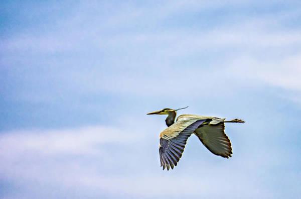 Sauble Beach Photograph - Great Blue Heron 2 by Steve Harrington
