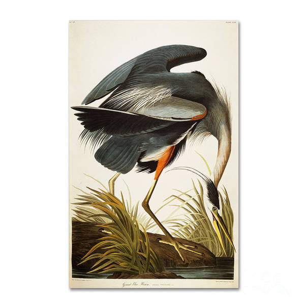 Vertebrate Painting - Great Blue Heron by Celestial Images