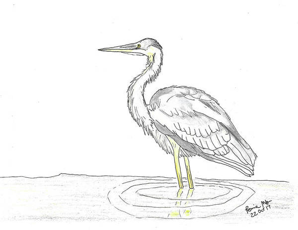 Great Blue Heron Mixed Media - Great Blue Heron by Ronnie Maum
