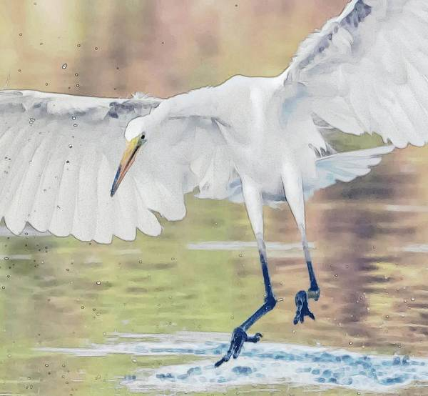 Photograph - Great Egret Chase Art 9861-072316-2cr by Tam Ryan