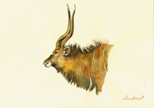 Antelope Wall Art - Painting - Greater Kudu by Juan  Bosco
