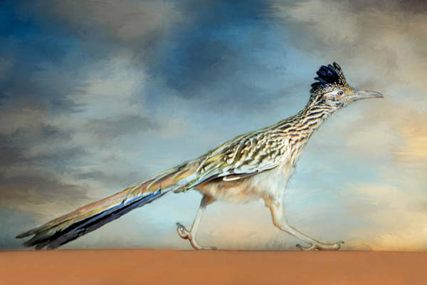 Roadrunner Painting - Greater Roadrunner by Barbara Manis