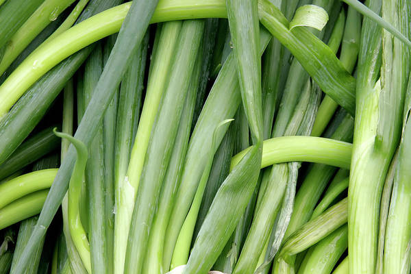 Photograph - Green Onion Market Bergen by KG Thienemann