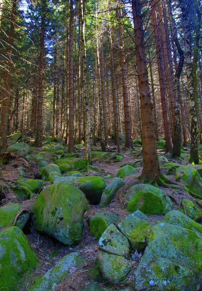 Wall Art - Photograph - Green Rocks by Roland Hall
