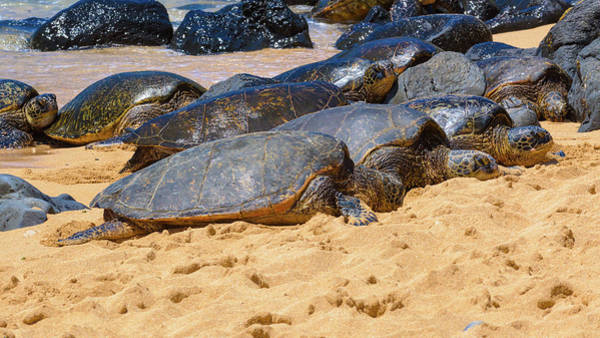 Photograph - Green Sea Turtles by Jim Thompson